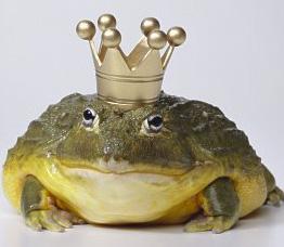 המלכה והצפרדע