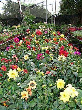 לחובבי הגינון נפתח קורס טיפוח הגינה הביתית.