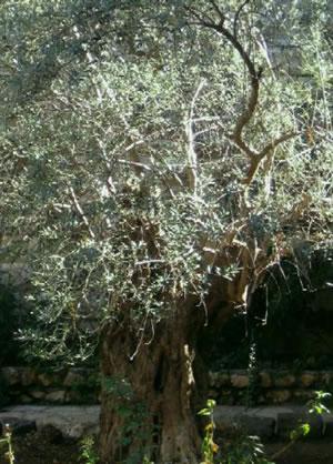 מהם הצמחים המבוקשים ביותר על ידי בעל הגינה הישראלי? כנסו לכתבה ותגלו.