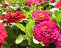 פרחים המתאימים לעונה זו שיצבעו את הגינה והאדניות