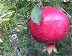 סימבוליקה של פירות באמנות