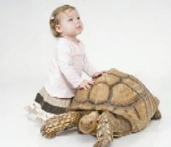 קולקציות סתיו - חורף  2007/8 לילדים עד גיל שנתיים