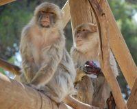 בפארק הקופים- הפנינג עם להקת אפריקנה והכנת שבשבות רוח צבעוניות