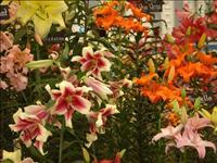 תערוכת הפרחים ועיצוב גינות ממש מעבר לפינה...