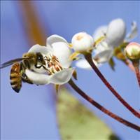 פסטיבל הדבש: דבורים בכוורות בעלות סדר חברתי הראוי להתפעלות