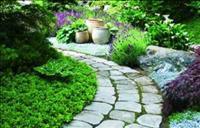איך להפוך את הגינה לחגיגה של ריחות נעימים?