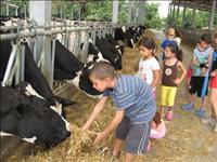 הצדעה לענף החלב הישראלי