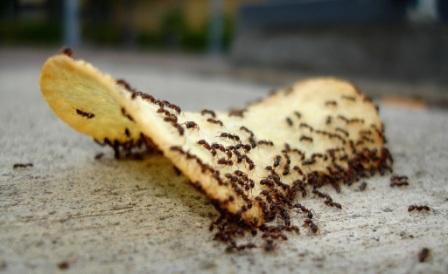 כיצד נתמודד עם 'מכת הנמלים' בבית