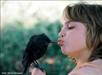 ההולנדים 'כבשו' את פסטיבל סרטי הילדים והנוער