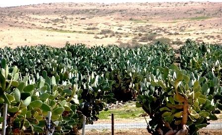 'חוות צברי אורלי' - מתוק בפנים בריא בחוץ