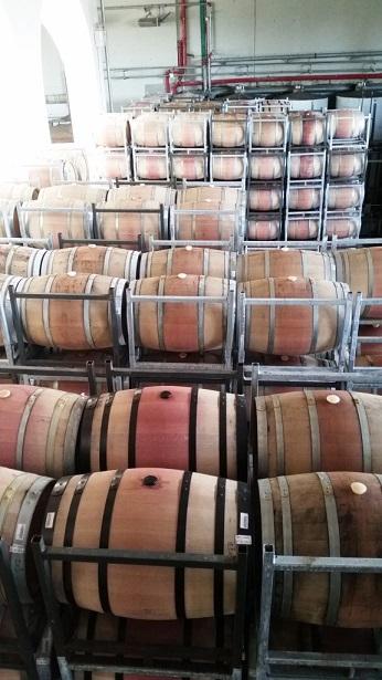 נכנס יין ויצא מרוץ הבוז'ולה במועצה האזורית גזר