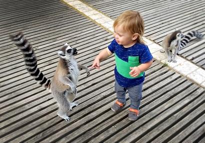 גן החיות התנ