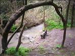 שיקום והתחדשות ביערות הכרמל
