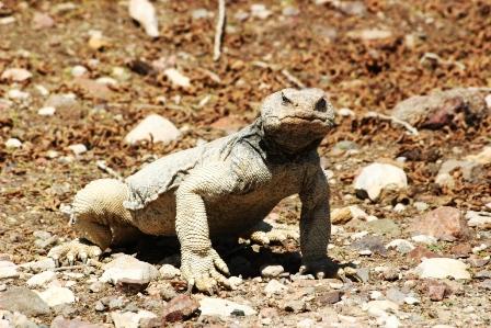 ספארי קייצי בערבה, בשמורת טבע