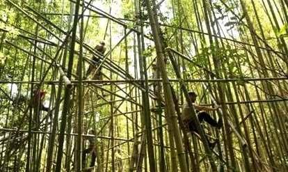 Big Bambu - ���� ������ �������� �����