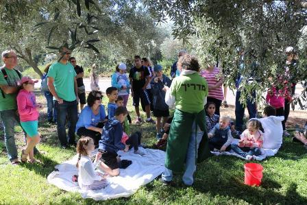 פסטיבל ימי ענף הזית ה- 20 וחגיגות המסיק, בגליל בגולן ובעמקים