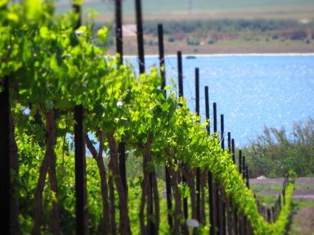 בשביל היין - מטיילים מבלים וטועמים, ממיטב יינות הכרמים